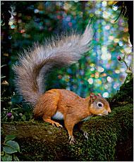 07squirrel1901.jpg