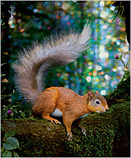 07squirrel1901.jpg