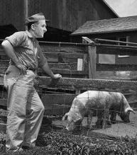 key pig farmer