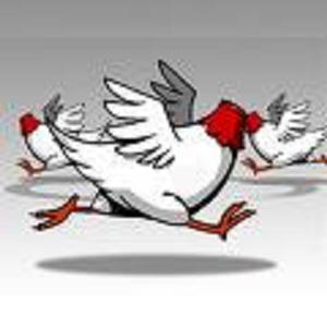headless chickens