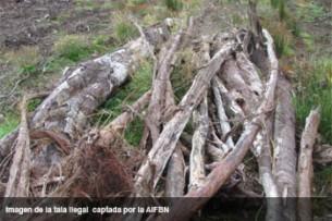 Harvard accused of illegal logging in Chile