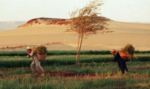 Harvard african land grab Farmers-work-in-thhe-Saha-007