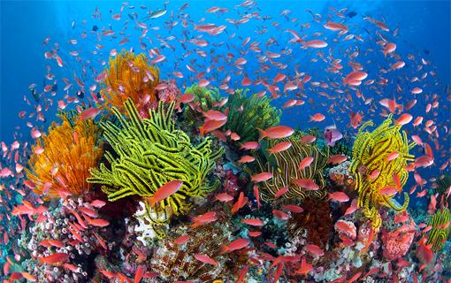 barrier-reef-before