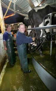 key-milking-cow