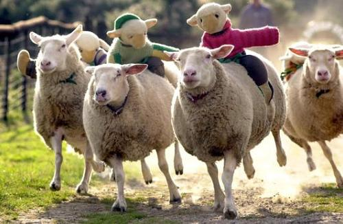 Strange sheep