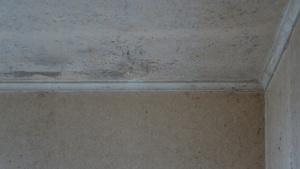 Mould in a State House close to the one that helped to kill Emma-Lita Bourne.  Photo: RNZ / Kim Baker Wilson