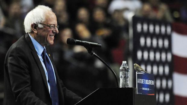 Bernie Sanders bird