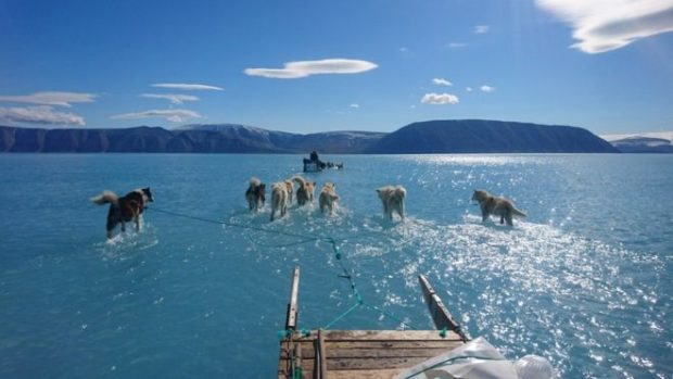 With their sled in tow, a pack of dogs trudge towards a distant mountain range in north-west Greenland.